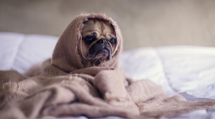 När husdjuret blir sjukt